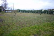 Vente terrain - LA FERTE HAUTERIVE (03340) - 901.0 m²