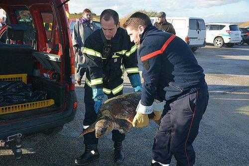 tortue caran caran retouvée dans le morbihan