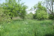 Vente terrain - OUAINVILLE (76450) - 1200.0 m²
