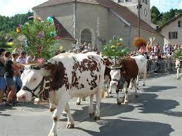 descente des vaches