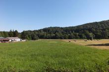 Vente terrain - BOURG DE BIGORRE (65130) - 2788.0 m²