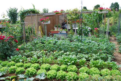 Votre jardin familial à Noisy le Grand