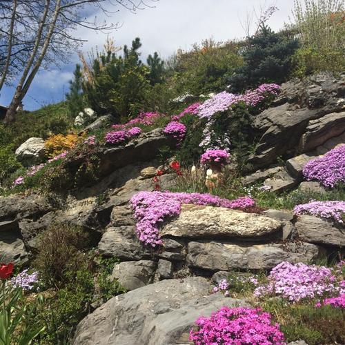 Fleurs Morzine