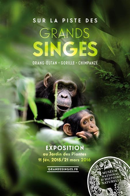 Les Grands Singes A La Galerie De L Evolution Du Jardin Des Plantes